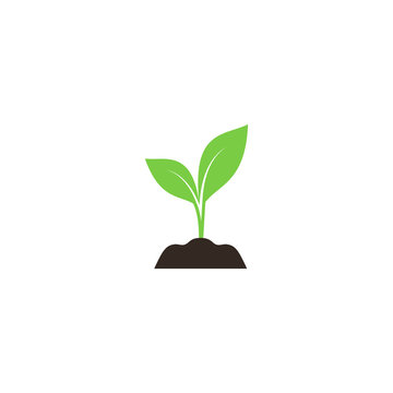 Young sprout in soil colorful vector icon. Green young plant in soil simple symbol.