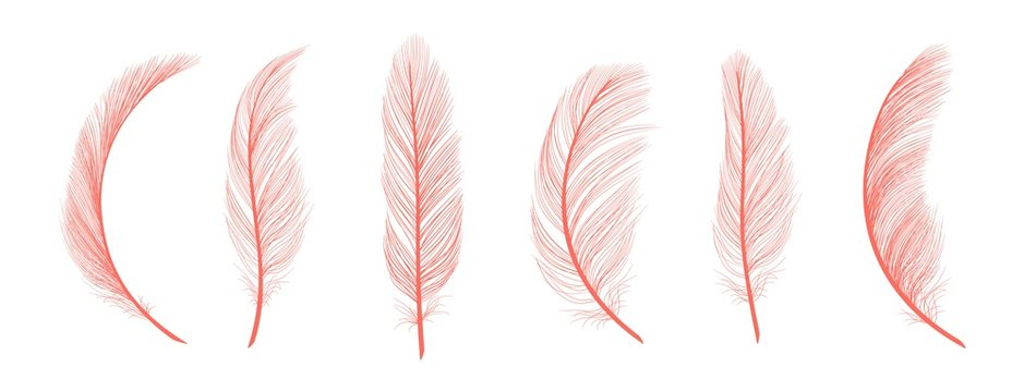 Trendy coral feathers. Vector pink fallen feathers isolated on white background. Exotic feather bird, soft and fluffy pink