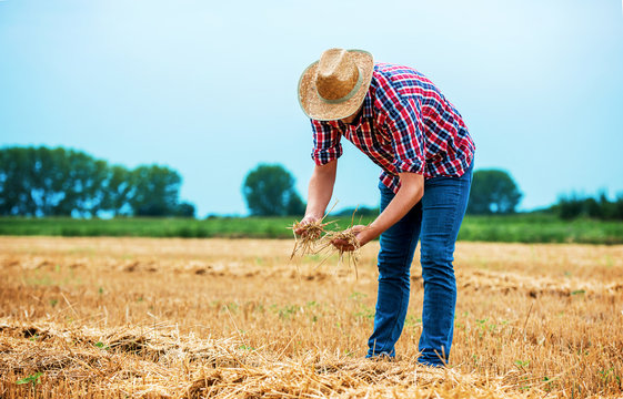 Farmer in a wheat field after the harvest. Agricultural concept