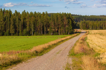 The curved country road through fields with green and dry grass surrounded with the dense pine forest, North Sweden