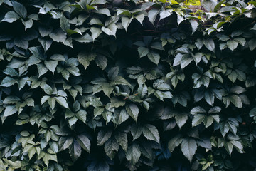 leaves on a stone fence pic.2