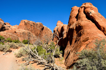 Pine Tree Arch Trail