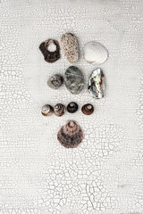 Still Life Photography. Beachcomber finds seashells and stones.
