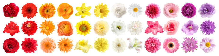Poster Gerbera Set of different beautiful flowers on white background. Banner design