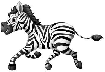 Zebra running on white background