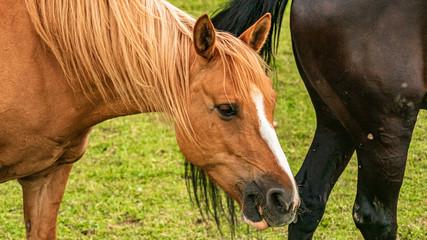 Beautiful horses at Aholming, Bavaria, Germany