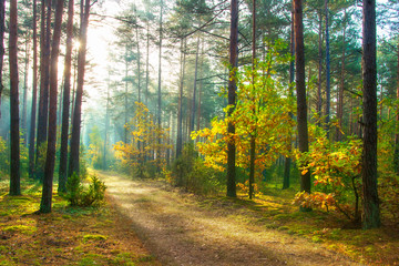 Autumn. Scenic forest illuminated of sun. Beautiful sunny nature landscape