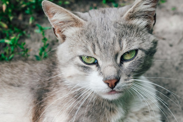 Homeless cat looks into the frame. Photo of a cat near. Gray cat with green eyes