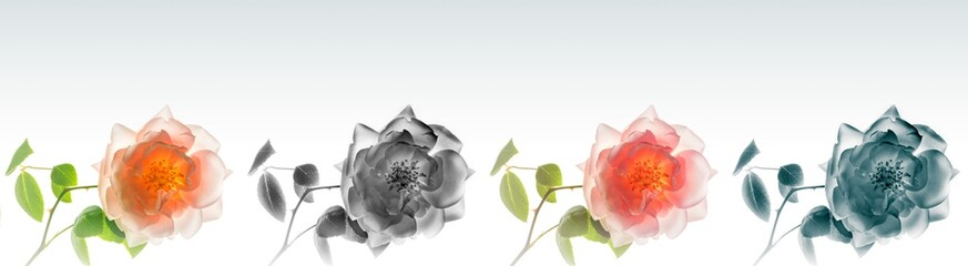 High resolution floral panoramic photographic montage of Rose. Each image has been individually colour graded, and can be used as one high res file, or cropped and used as single images.