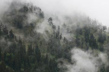 Wall Mural - Berg im Nebel