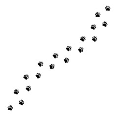 Vector flat black path of bear foot print steps isolated on white background