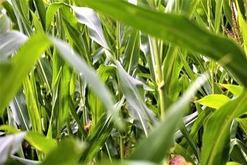green grass in the garden