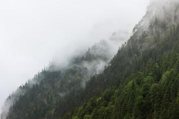 Wall Mural - Berg und Wald in Nebel