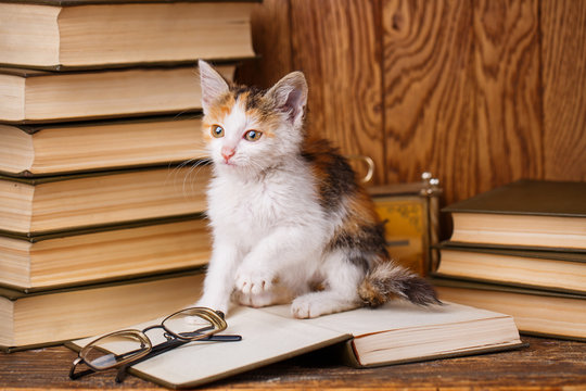 A kitten sits on a book and plays
