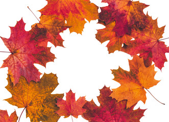 Fototapete - Autumn composition with maple leaves isolated