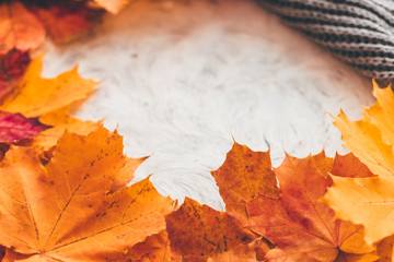 Wall Mural - Autumn composition with maple leaves. Selective soft focus.