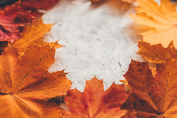 Fototapete - Autumn composition with maple leaves. Selective soft focus.