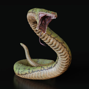 Snake with an open mouth.3d illustration