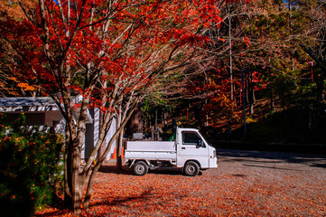 Red autumn maple and white pickup truck at Chureito Pagoda Arakurayama Sengen Park - Fujiyoshida