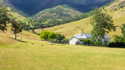 house with sheep in New Zealand