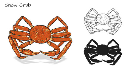 Crab vector by hand drawing.crab silhouette on white background.Snow Crabs art highly detailed in line art style.Animal pictures for coloring