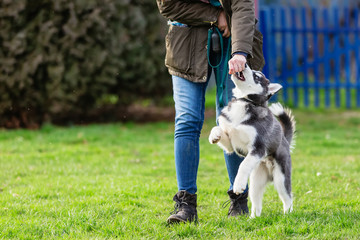 Tuinposter Hond woman trains with a young husky on a dog training field