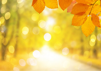 Photo sur Plexiglas Jaune Vibrant fall foliage