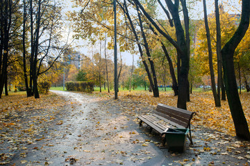 Autumn landscape in the city park with bench and walking path.