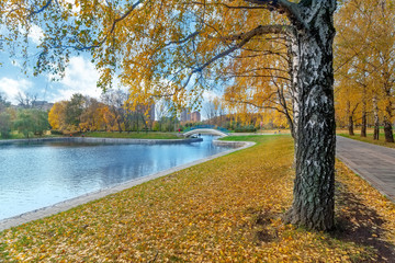 Autumn landscape with the avenue of gold birches, pond and the bridge