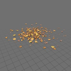 Dried scattered leaves 1