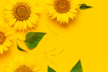 Fotomurales - Beautiful fresh sunflower on bright yellow background. Flat lay, top view, copy space. Autumn or summer Concept, harvest time, agriculture. Sunflower natural background. Flower card