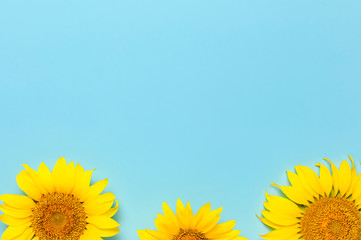 Fotomurales - Beautiful fresh sunflowers on blue background. Flat lay, top view, copy space. Autumn or summer Concept, harvest time, agriculture. Sunflower natural background. Flower card