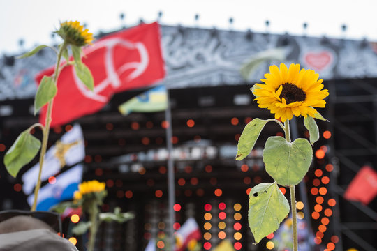 Sunflowers with the music stage in the background