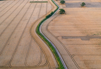 Ripe Golden Wheat Fields Aerial Fototapete
