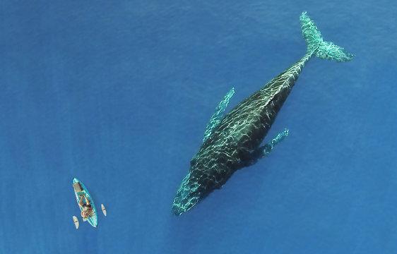Kayak next to Whale