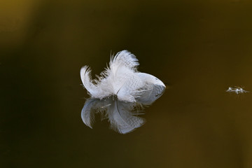 Abstract tuft of feathers against still water