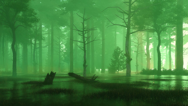 Mysterious forest swamp at foggy night or dusk