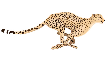 Running cheetah isolated on a white background. Vector graphics.