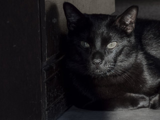 A Black Cat Sits in the Shadows