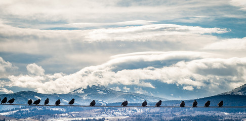 Flock of Birds on a Wire With Winter Landscape