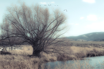 Old Crooked Tree Next to a Duck Pond