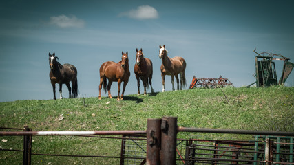 Farm Horses Stand on a Grassy Hill