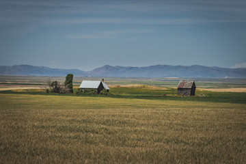Abandoned Rustic House in a Wheat Field