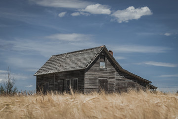 Rural Abandoned Homestead House in a Wheat Field