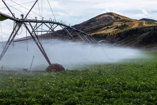 Wheel Line Sprinklers Watering Potatoes