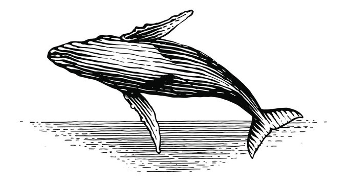 Illustration of a leaping Humpback whale in vintage style