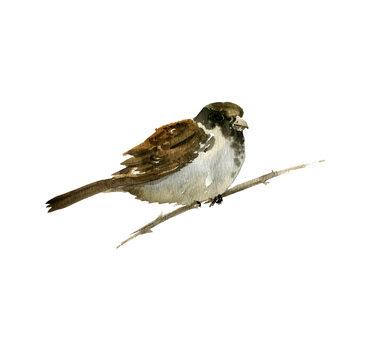 watercolor bird at tree branch