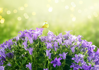Wall Mural - Mysterious spring or summer bright sunny background with blooming fantasy bluebells campanula flowers blossom and sitting yellow butterfly with glowing sparkle bokeh