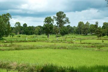 Reisfelder und Landwirtschaft in Südostasien