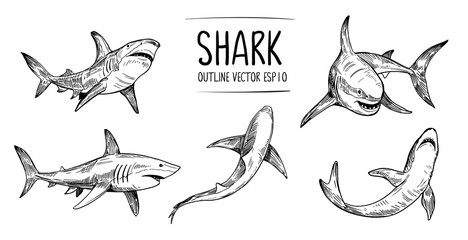 Set of  shark sketches. Hand drawn illustration converted to vector. Outline with transparent background